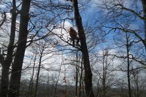 Sprænger træer med dynamit(4)
