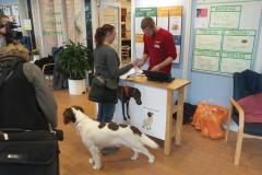 38 hunde var til eksamen_(1)