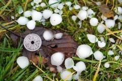 Kæmpe hagl(1)