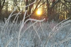 Solopgang i sne(2)