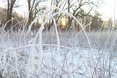 Solopgang i sne(4)