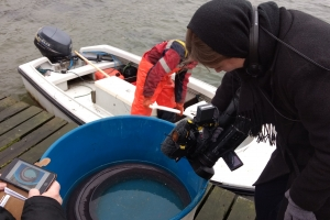 Fangede kæmpe havål i Lillebælt