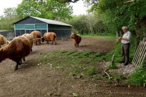 27. maj 2018: Søndag fejrer fynske landmænd kvæget. En række kvægavlere byder indenfor eller udenfor til et besøg ved deres kvæg.