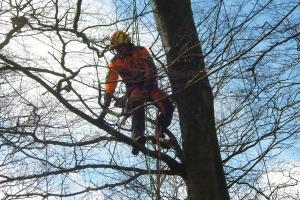 Sprænger træer med dynamit(5)