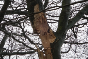 Sprænger træer med dynamit(7)