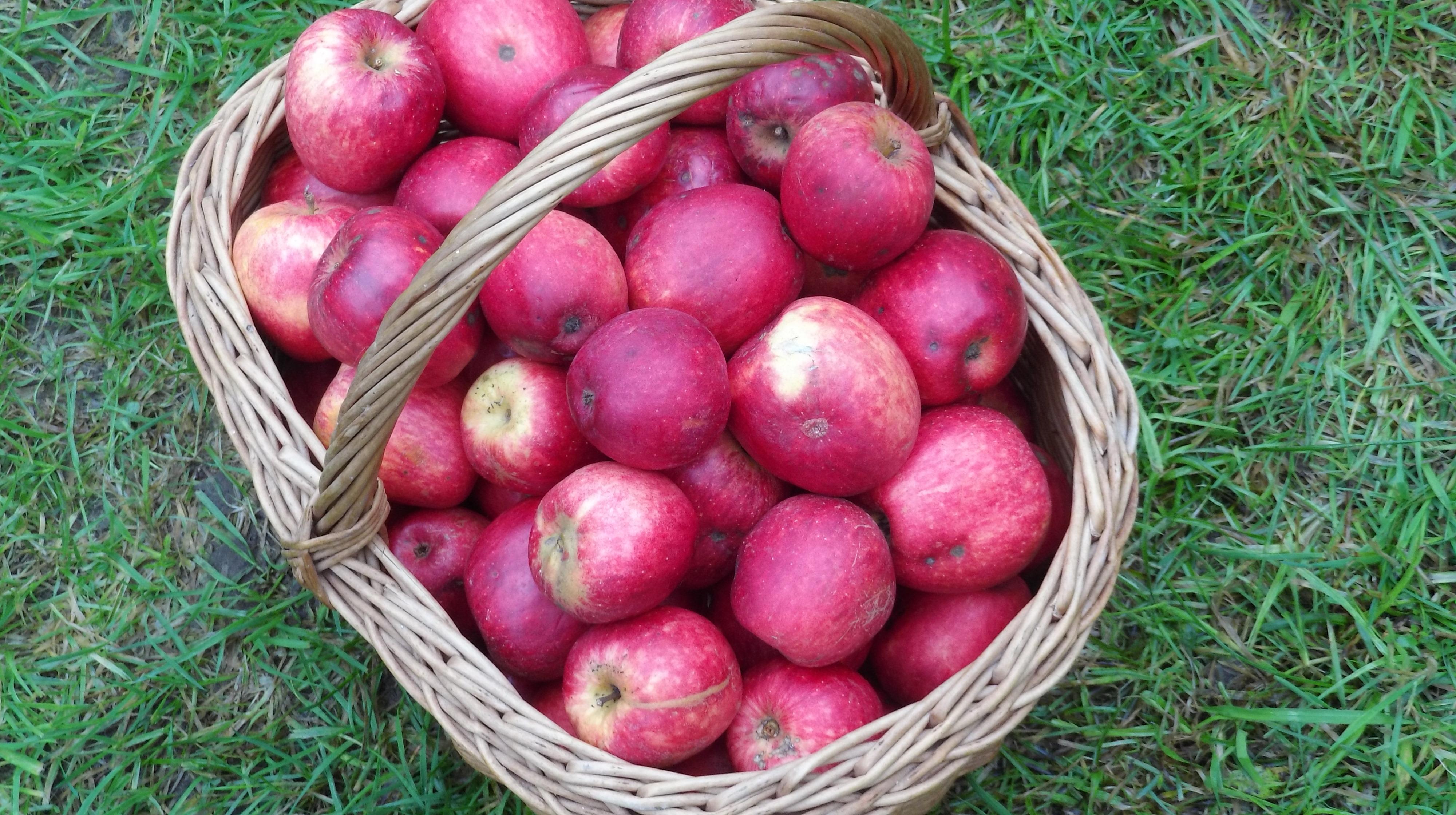 Ny fynsk æblesort fik navnet Kaj