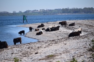 6. maj 2018: Enebærodde ved Odense Fjord. Foto: Ole Holbech