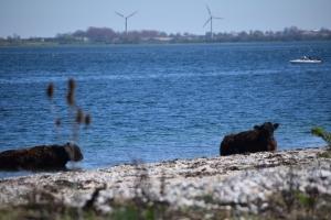 Ene6. maj 2018: Enebærodde ved Odense Fjord. Foto: Ole Holbech