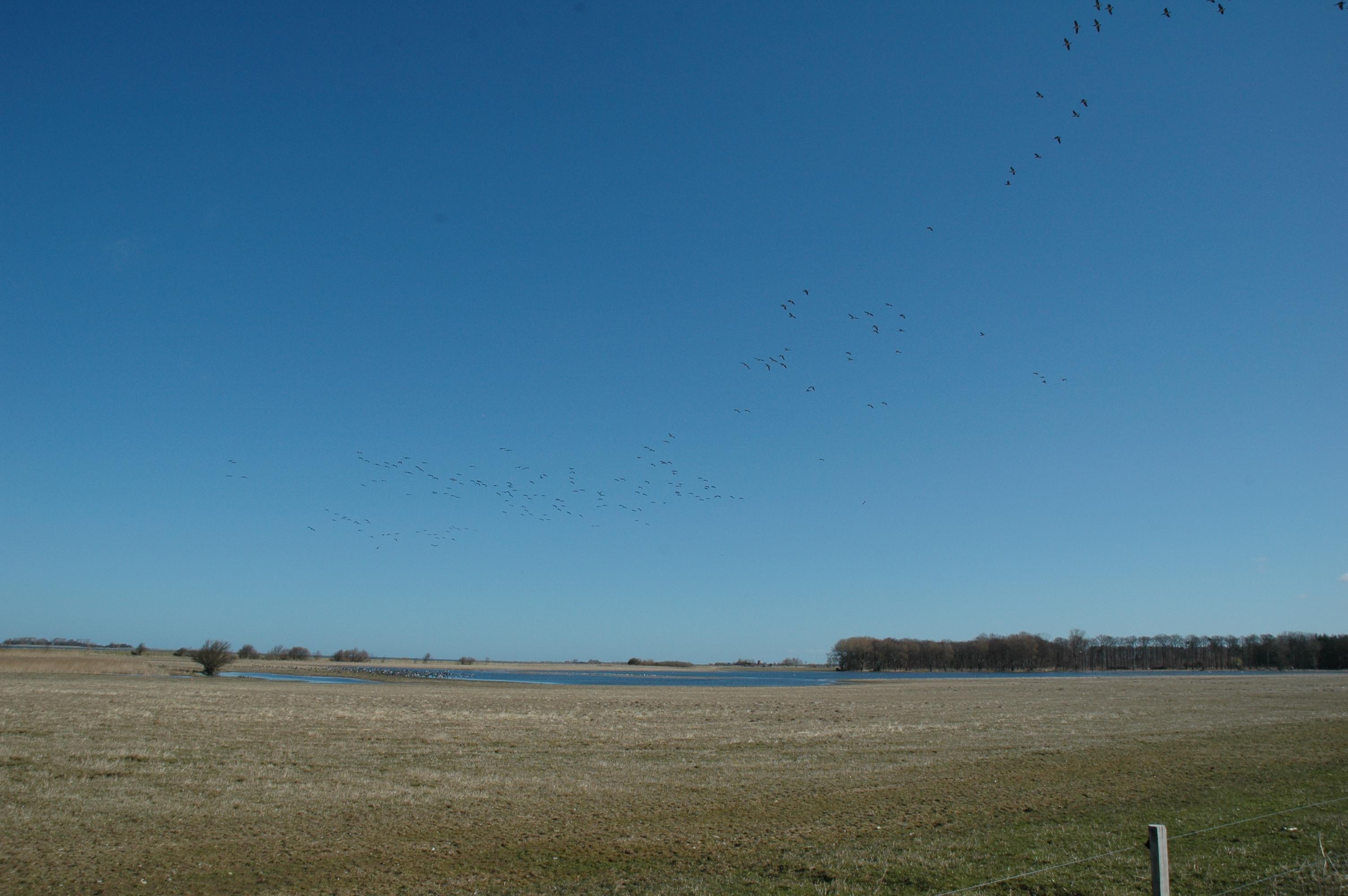 Gyldensteen Inddæmmede Strand ved Bogense