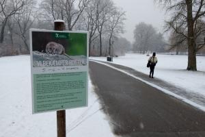 8. marts 2018: Odense Kommune har indledt en årelang krig mod rotter i en park midt i byen. Foto: Ole Holbech
