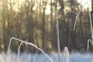 Frostvejr i solopgang